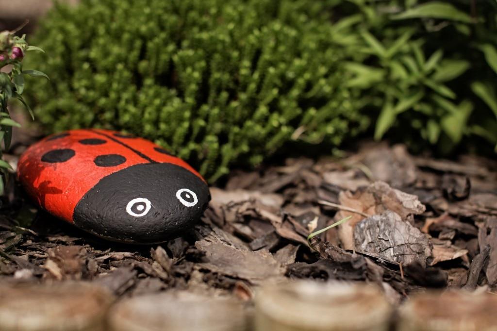 Stone Ladybug