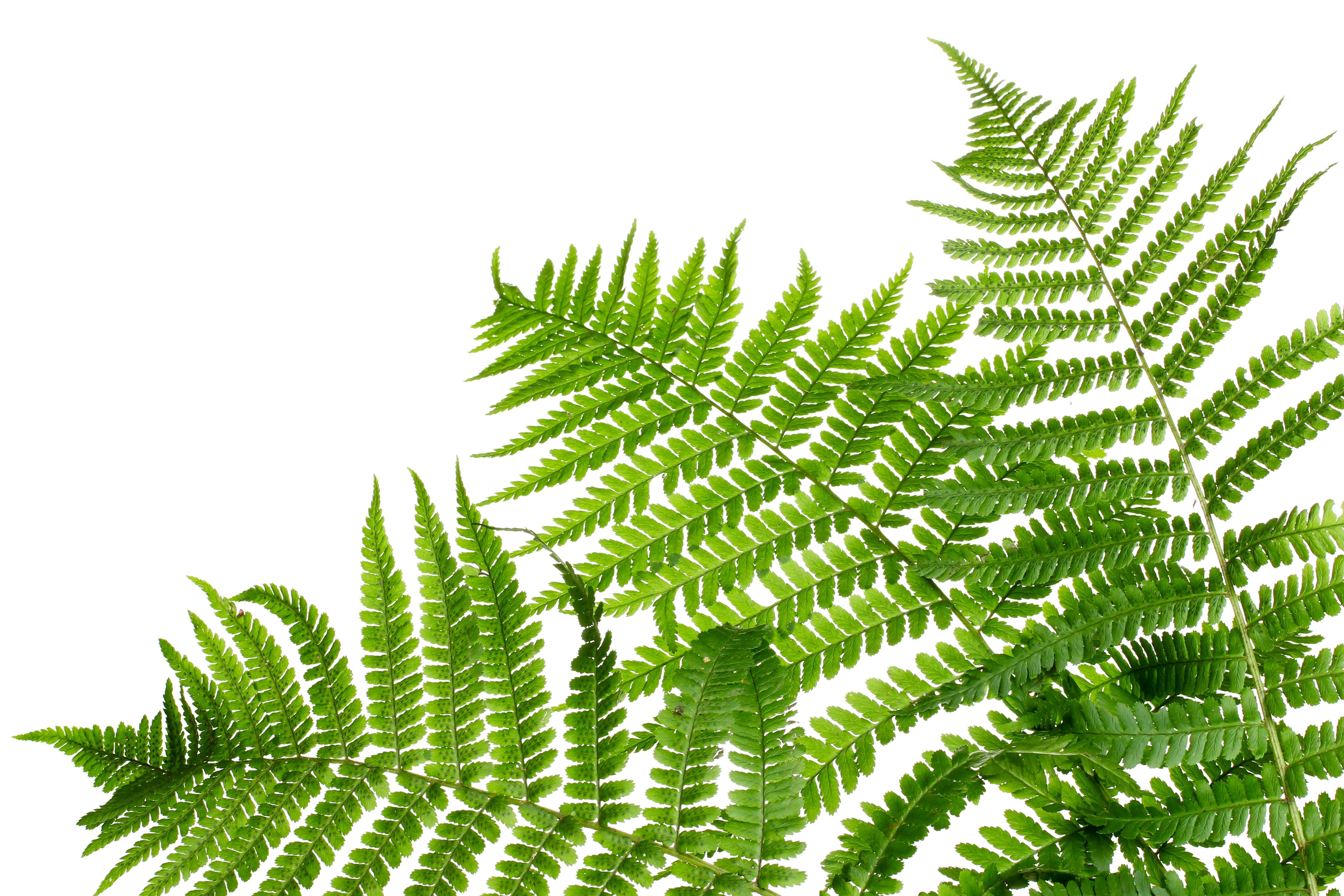 Diy Pressed Plants Ashley Furniture Homestore Blog