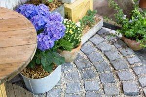 Purple flower in a flowerpot on stone blocks floor.