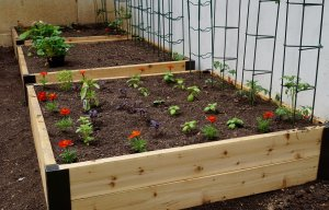 Raised beds, also called garden grow boxes or containers