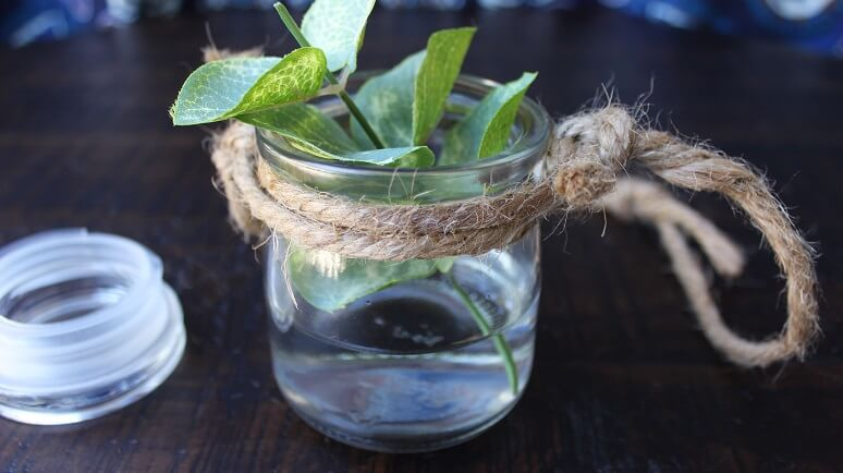 A complete hanging jar with water and a plant inside the jar.
