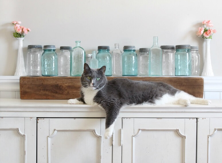 A photograph of jennys cat sprawled out on a console table with farmhouse mason jars behind the cat.