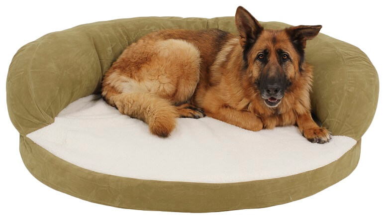 Large dog bed in a green color with a large dog laying on it.