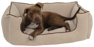 Medium sized dog bed with a brown medium sized dog laying in it.