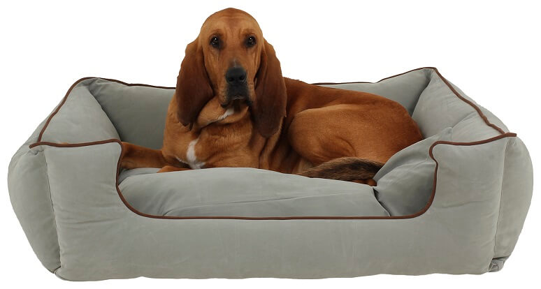 Large dog bed in a blue color with a dog with floppy ears laying on it.