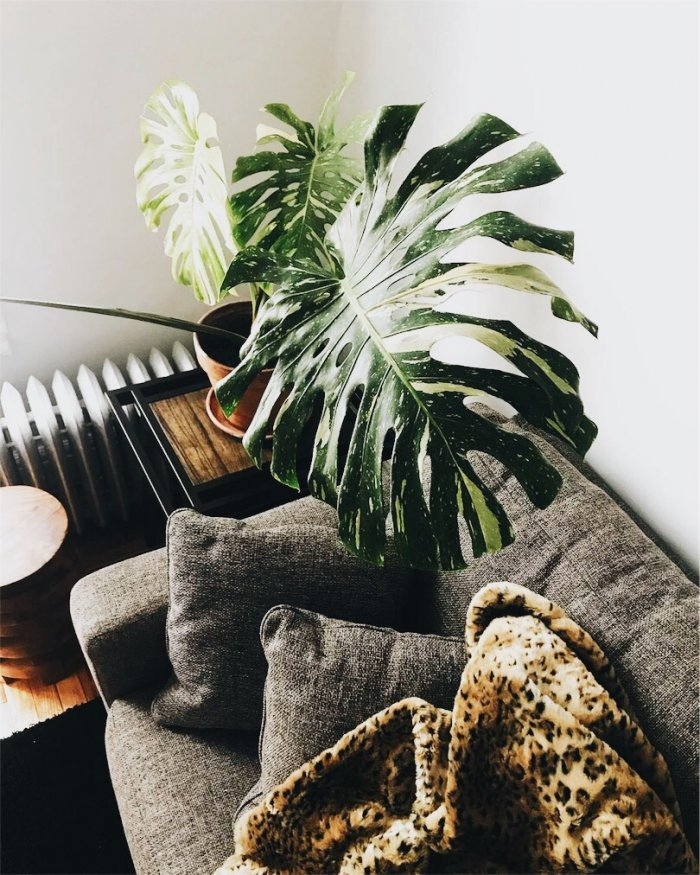 plant above grey couch