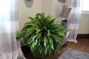large green plant in home office