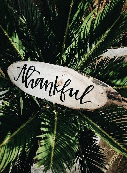 thankful on plants